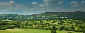 Hotels in Carlow County