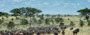 Hotels in Serengeti