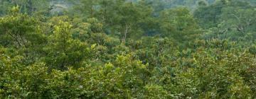 Hotéis em: Amazonas