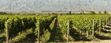 Hotels in Wine Route Mendoza