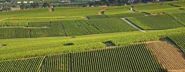 B&B/Chambres d'hôtes dans cette région: Champagne-Ardenne