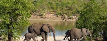 Hotels in Kruger National Park
