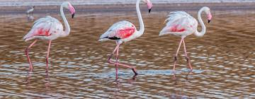 Hotels in Nature Reserve Ria Formosa