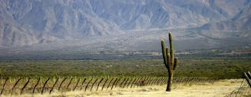 Hotels in Salta Wine Route