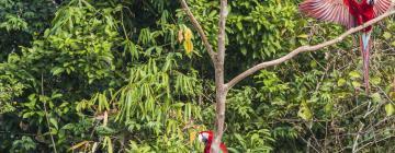 Hotels in Amazon Jungle