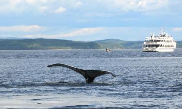 Hotéis em: The Whale Route