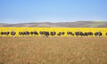 Hotels in Klein Karoo
