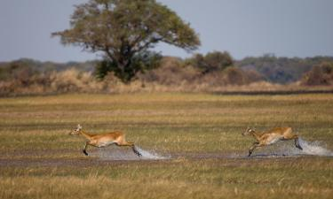 Hotels with Parking in Kafue National Park