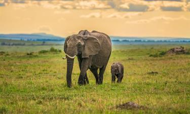 Hotels in Maasai Mara National Reserve