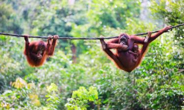 Hotels in Borneo