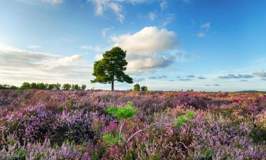 Hotels with Jacuzzis in New Forest