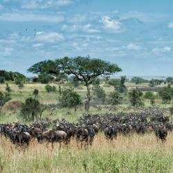 Serengeti 16 vacation rentals