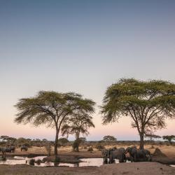 Chobe 6 guest houses