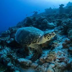 Male Atoll 12 vacation rentals