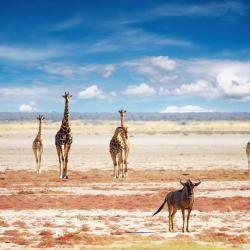 Etosha National Park 12 family hotels