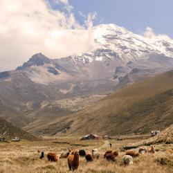 Chimborazo Province 5 cabins