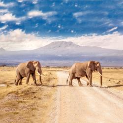Amboseli National Park  6 Glamping Sites