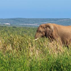 Addo Elephant Park 20 bed and breakfasts