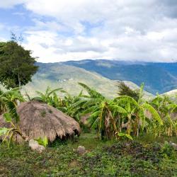Papua 3 guest houses