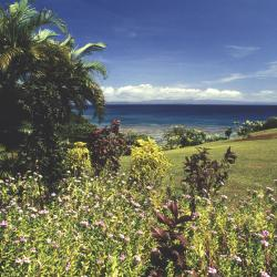 Taveuni 7 vacation rentals