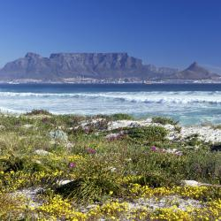 Table Bay