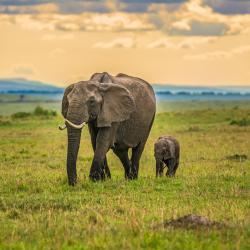 Maasai Mara National Reserve 43 Glamping Sites