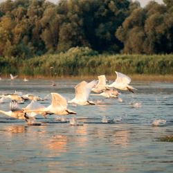 Danube 8 lodges