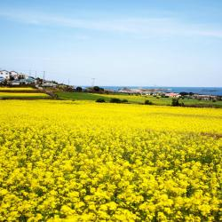 Jeju Island 3 Glamping Sites