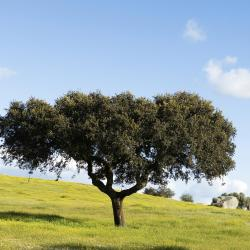 Alentejo 106 farm stays