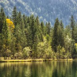 Bavarski gozd