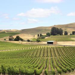 Weingebiet Napa Valley