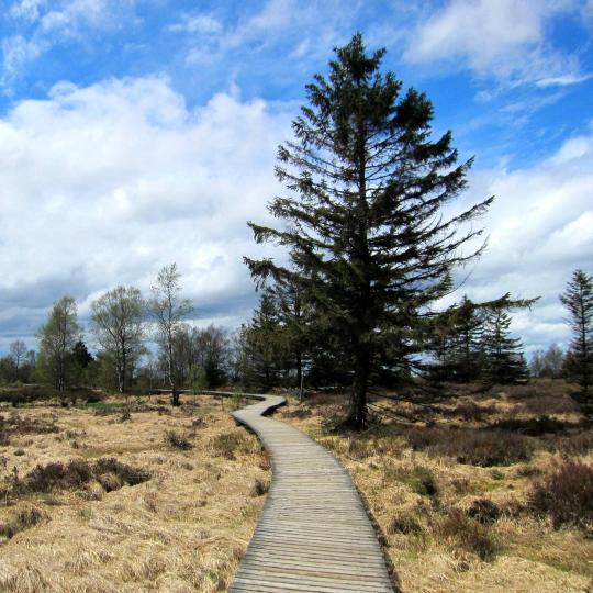 Trekking in the High Fens