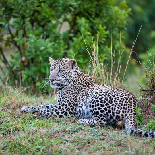 Wildlife safari in Aywaille