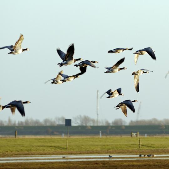 Birdwatching in Warkumerwaard