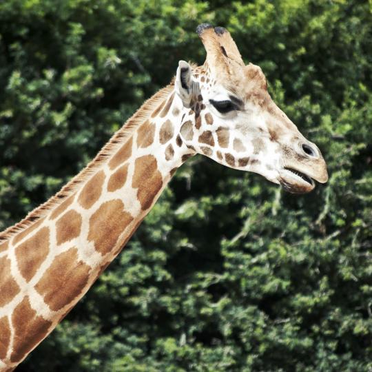 Zoo de Gaia