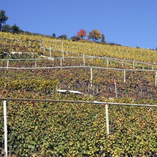 Weinverkostung in Visperterminen
