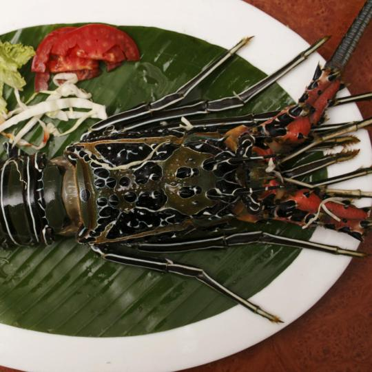 Cuisines of Candolim