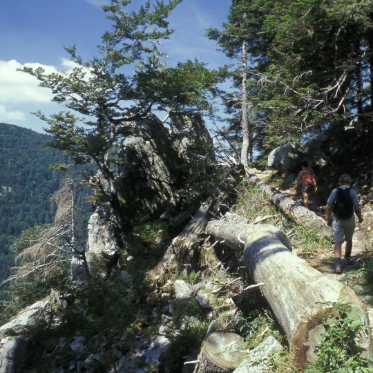 クレスト・ルート・ハイキングコースからの素晴らしい景色