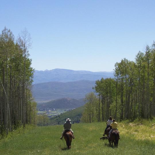 ヴォージュ山脈で乗馬