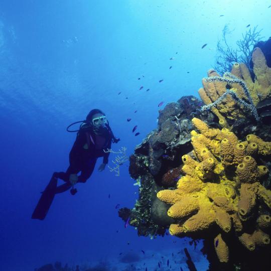 Islas Columbretes Marine Reserve