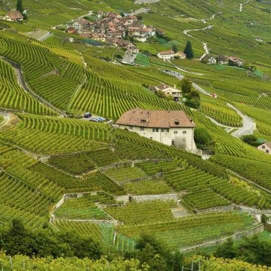 Wine tasting in Mendrisiotto District