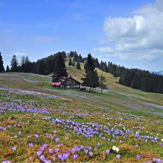 Detox at Oberstaufen's Schroth-Spa