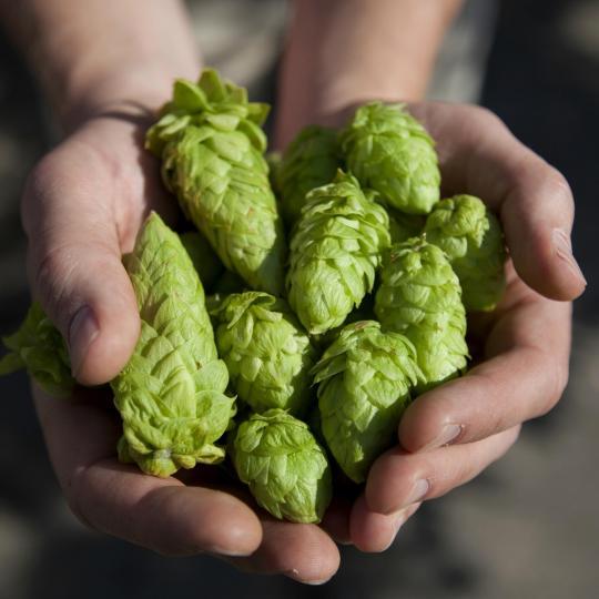 Hop to it: Bitburger Brewery