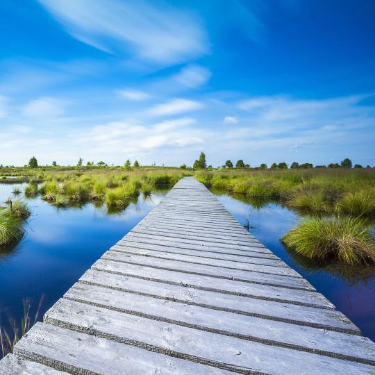 Explore ancient bogs in High Fens National Park