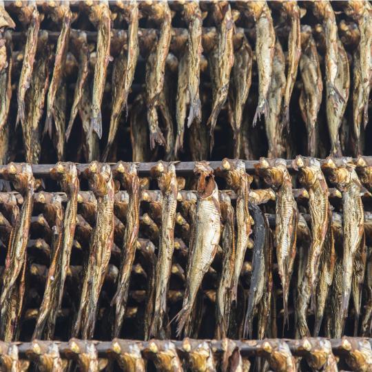 Fish & Chips in der Fischräucherei Kuse schlemmen