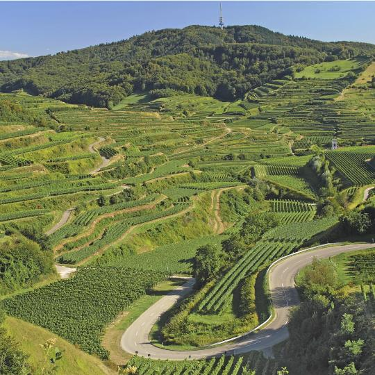 Drive the scenic Baden Wine Road
