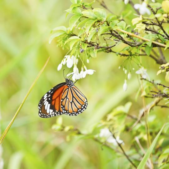 See Schmetterlingsfarm Trassenheide butterfly farm
