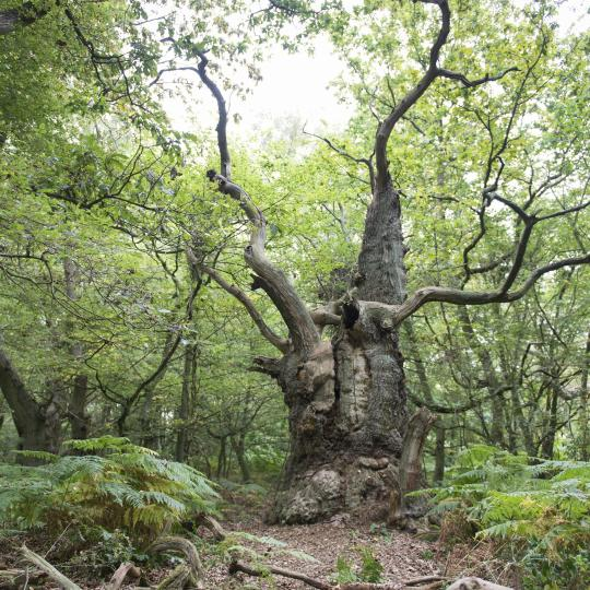 Im Naturerbe Zentrum Rügen durch Bäume streifen