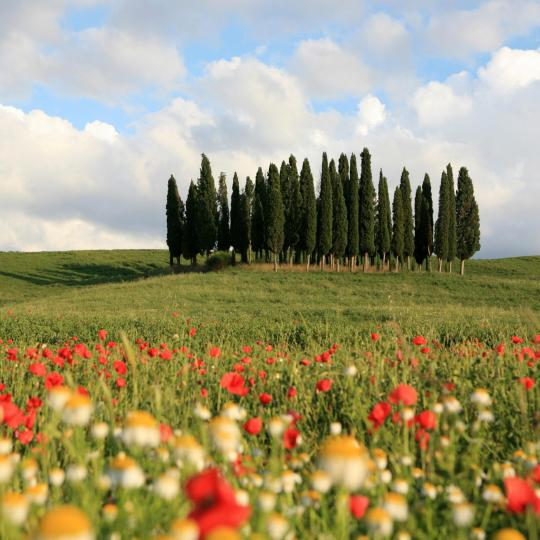 UNESCO-protected Val d'Orcia Valley