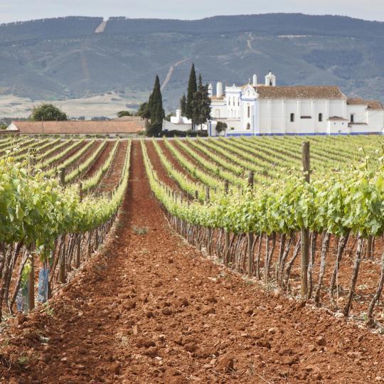 Ruta del Vino de Alentejo